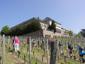 Schloss Johannisberg © M. Joppich 2013