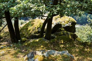 Felsen oberhalb von Eppstein © M. Joppich 2014