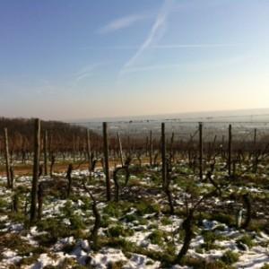 Rheingau im späten Winter © S. Holicki 2015