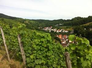 Weinlage Steinkopf © M. Seibel